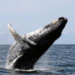 baleine2