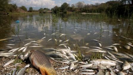 L'état de la rivière suite à un déversement accidentel de Métazachlor