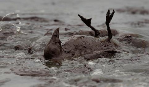 Les marées noires dût au pétrolier